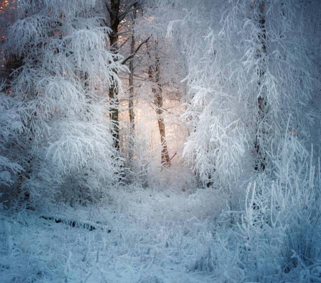 magical_forest_by_xrust_d9nsfxo-pre