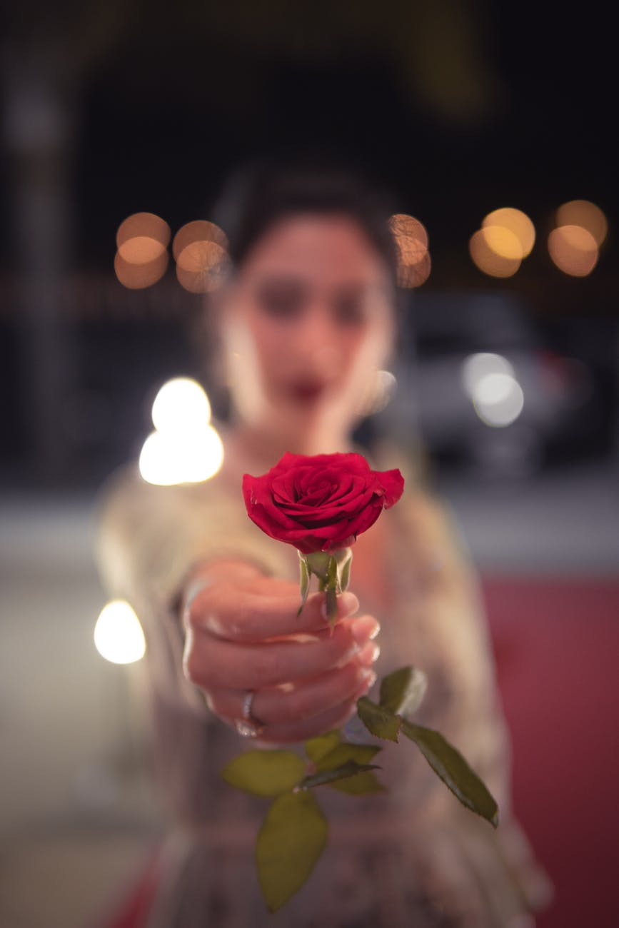 selective focus photo of red rose