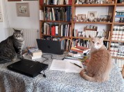 Book ends on Kate Zarrelli's Desk