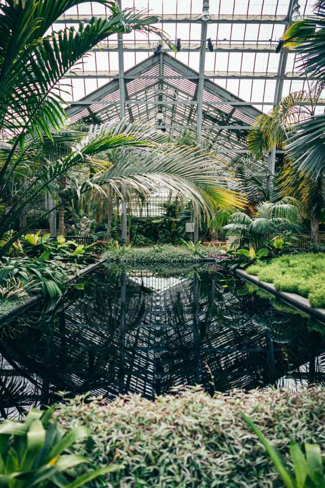 interior of a green house with a pond