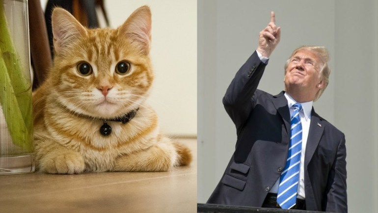 This Cat 'Pretty Sure' He'd Be a Better President Than Donald Trump