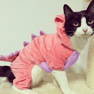 costume, pet costume, pet costume ideas, Halloween, cat, cat costume