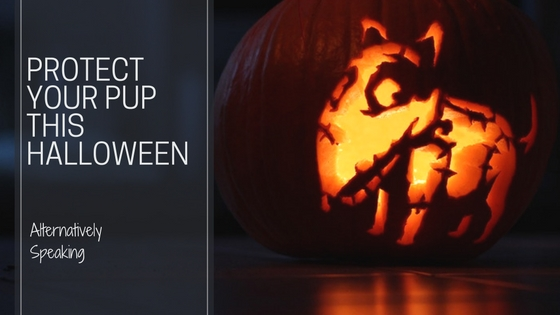 Protect Your Pup This Halloween