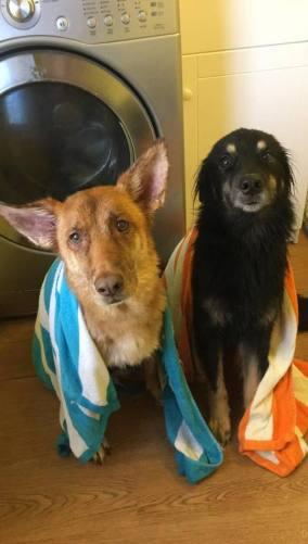 dog, dog bath, doggy bath time, puppy bath time, bath time