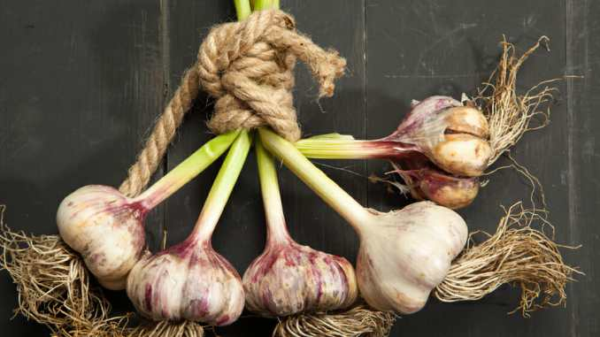How Aged Garlic Extract impacts health
