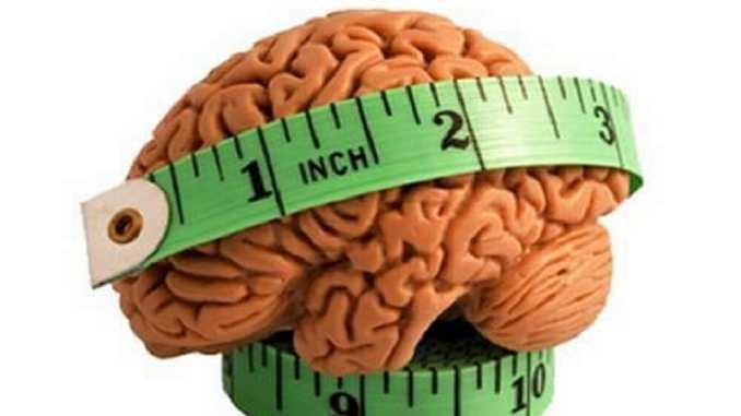 size of brain