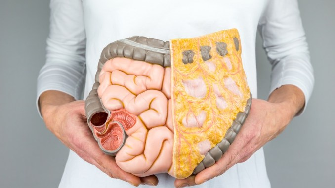 does vitamin impact gut health