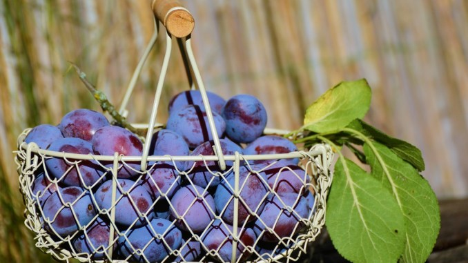 blueberries are a powerhouse from nature