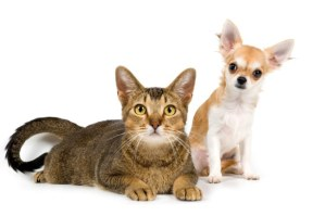 Calm Your Cats and Dogs with Aromatherapy