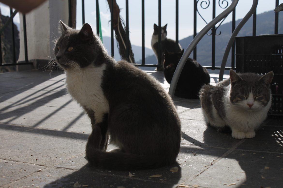 Four kitties on a terrace | AlternativeTravelers.com