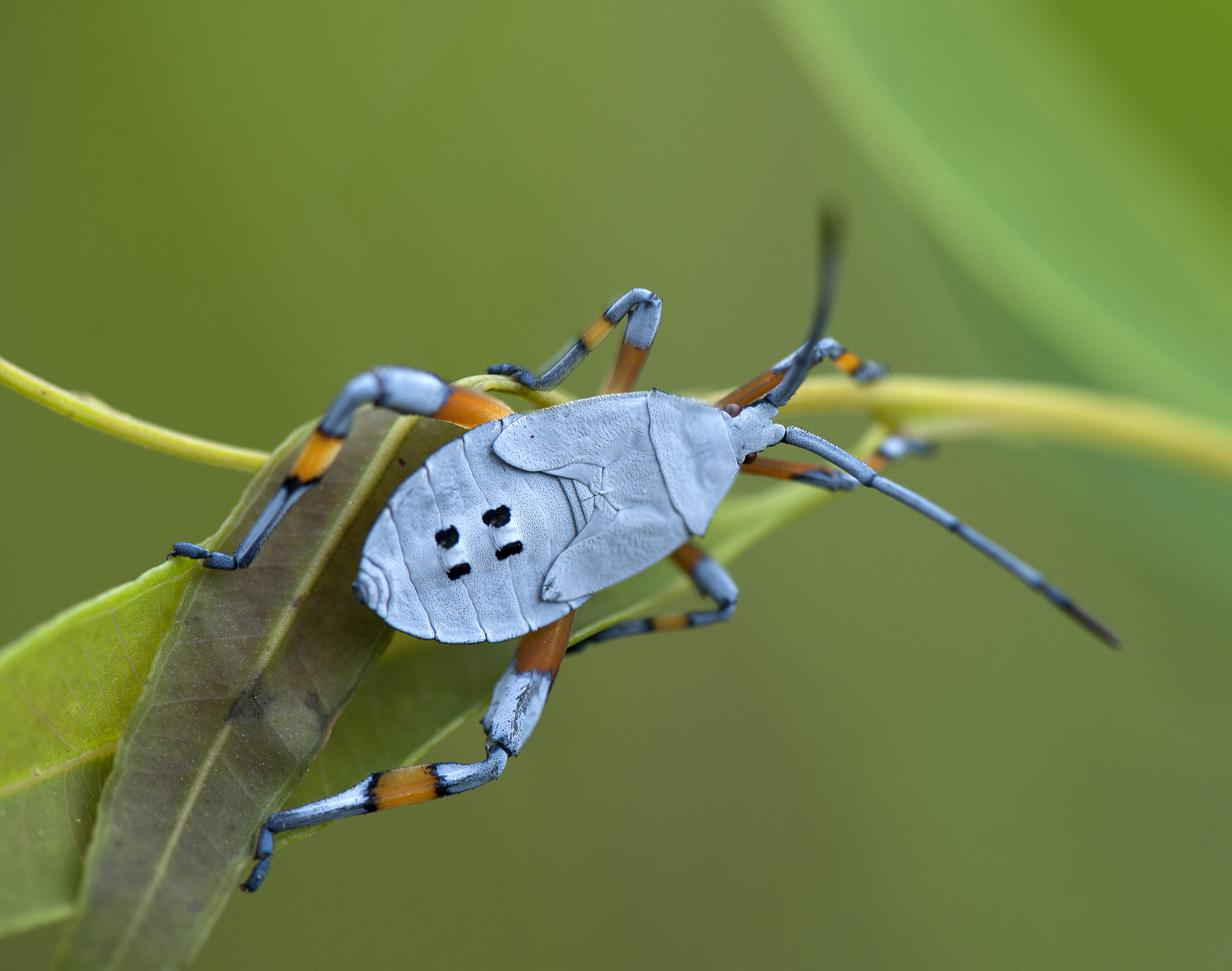 The important role of insects