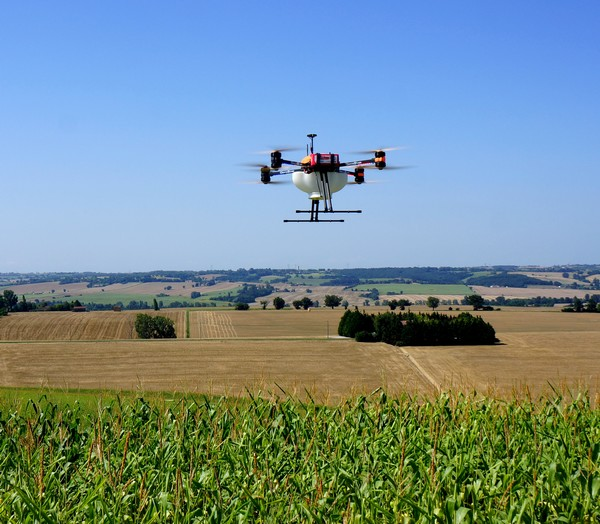 Organic agriculture: The treatment of European corn borer by dropping trichograms by drones