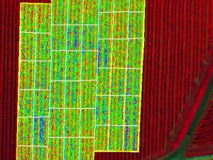 altigator-drone-uav-agriculture-ndvi-nir-crop-yield-management-multispectral