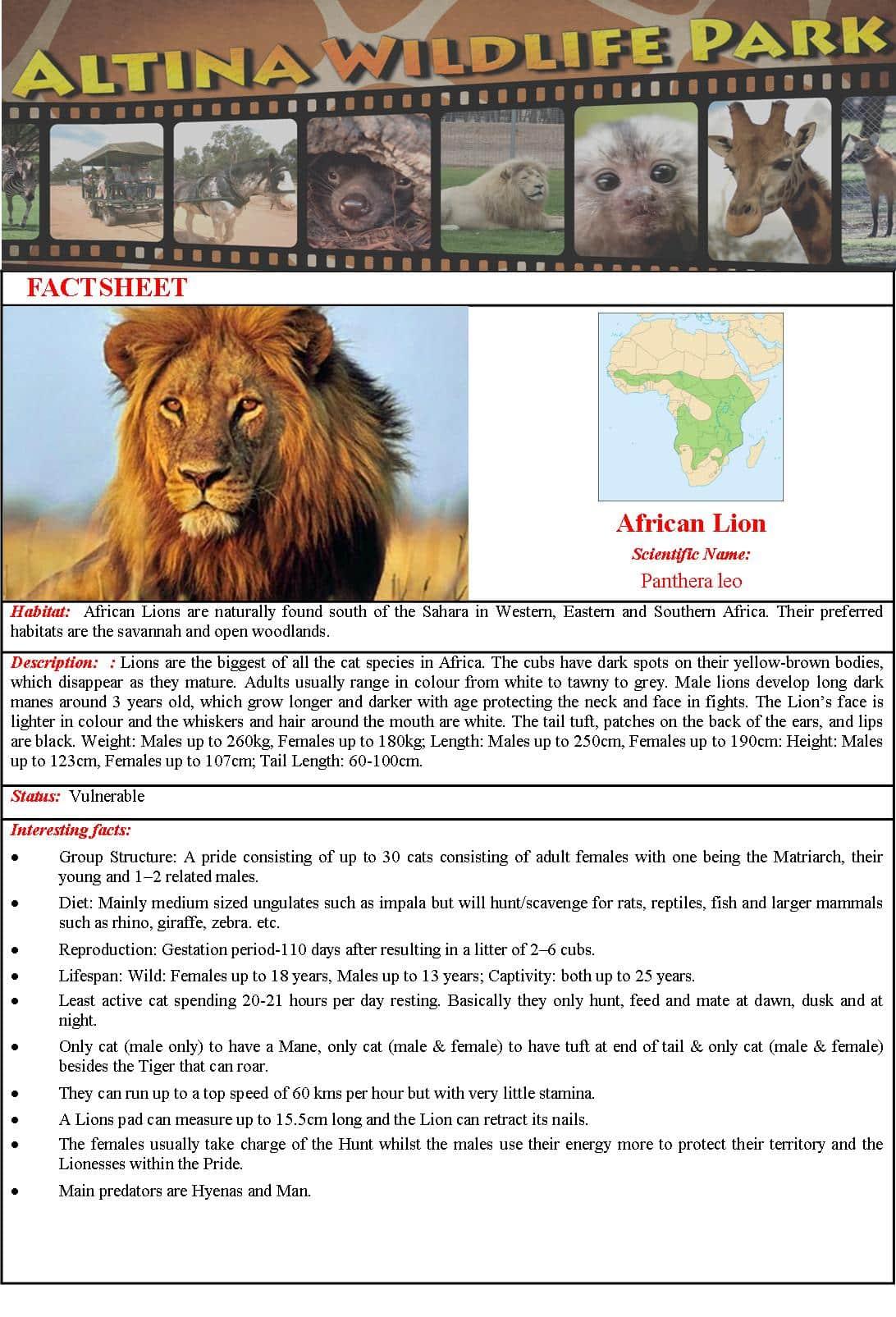 Africanlionfactsheet