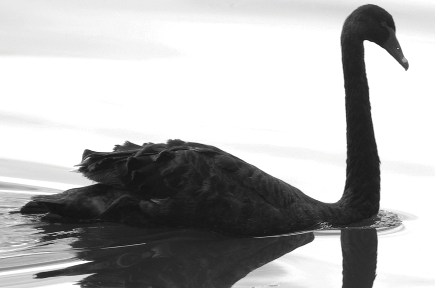 Riding the Black Swan: CMO's Guide To Tough Times
