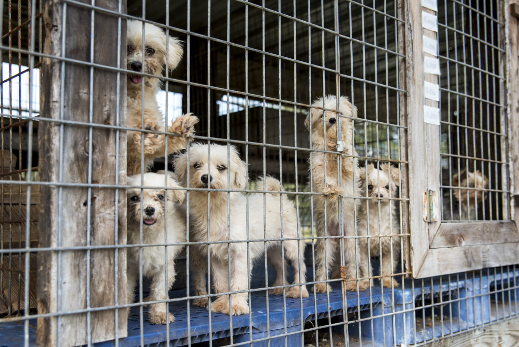 Greater Birmingham Humane Society Calls For Legislative Action After