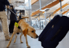 TSA canine
