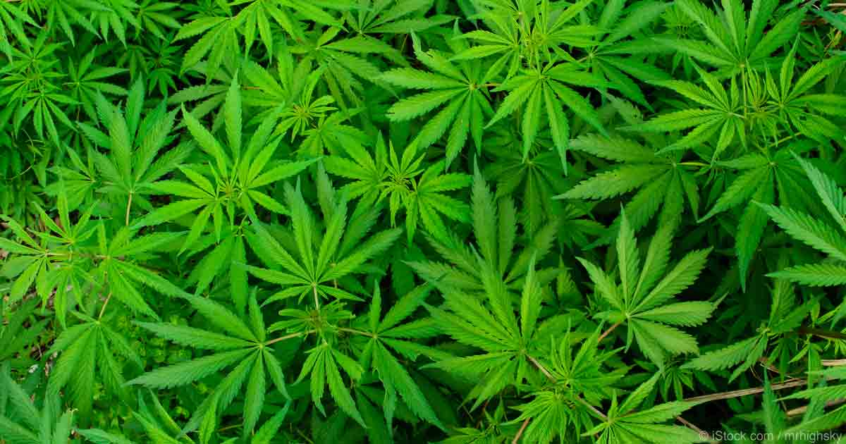 NASRO Supports Enforcement of Federal Marijuana Laws