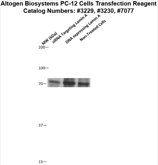PC-12 Transfection Kit (Rat Pheochromocytoma Cells
