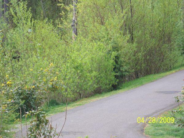 mill creek buffer enhancement