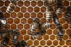 local-honey-bee-removal-albuquerque-a23-505-500-4780