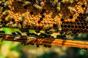 local-honey-bee-removal-albuquerque-a28-505-500-4780