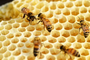 local-honey-bee-removal-albuquerque-c4-505-500-4780