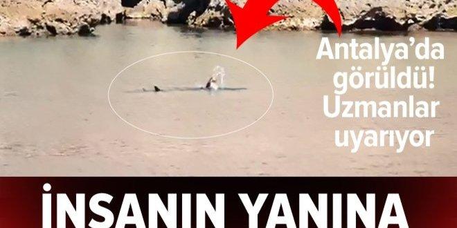Antalya'da Akdeniz foku beslenirken görüntülendi