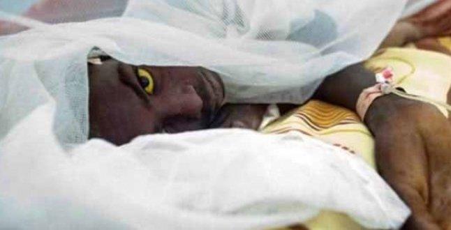 Nijerya'da sarı humma salgınında 115 kişi öldü .