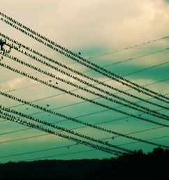 how do birds sit on power lines without getting electrocuted  [ 2566 x 1621 Pixel ]