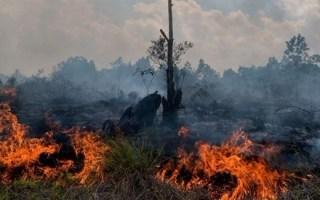 إعلان حالة الطوارئ في 4 أقاليم إندونيسيّة مع انتشار حرائق الغابات