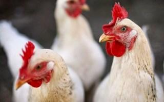 بلغاريا تعلن تفشي إنفلونزا الطيور