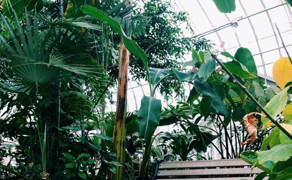 Talcott Greenhouse
