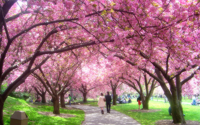 This visitor's guide has everything you need to help you plan your visit to the brooklyn botanical gardens; Brooklyn Botanic Garden Tour Virginia Club Of New York