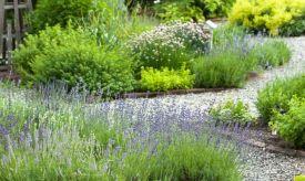 Jardín de aromáticas