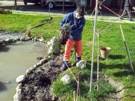Plantando aromáticas