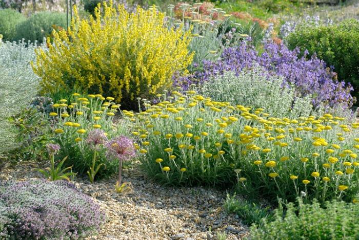 Plantas resistentes a la sequía, lúcidas y con espectaculares floraciones.