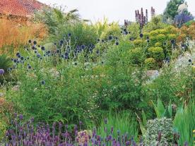 Colores fríos y cálidos contrastados en esta selección de gramíneas, aromáticas y suculentas