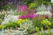Diferentes portes y tamaños de plantas en flor