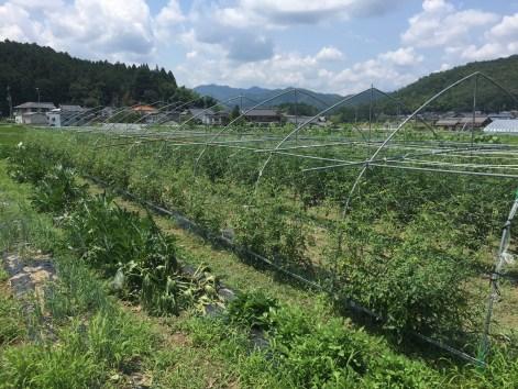 Farm shot