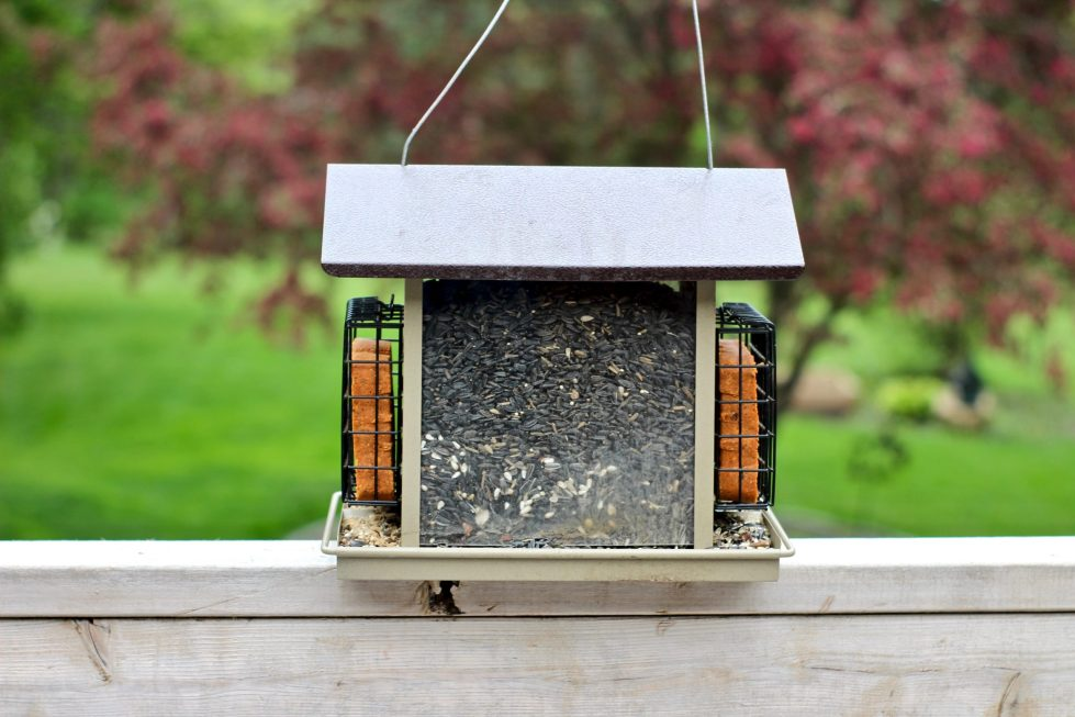 A hopper-style bird feeder filled with black oil sunflower seeds, and with two suet bricks, sitting on a ledge in front of a tree.