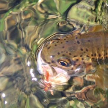 10 Ways To Improve Your Dry Fly Fishing