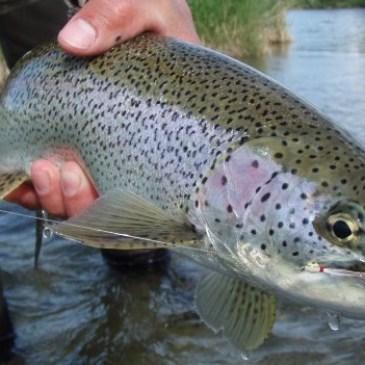 Springtime Sockeye Fry Fishing
