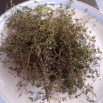 Picture of the herb thyme