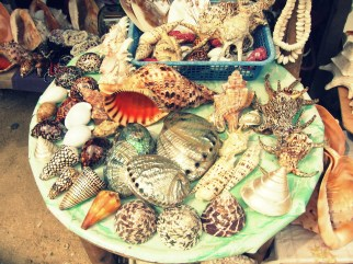shells displayed in the shores of Boracay in the Visayan Islands of the Philippines