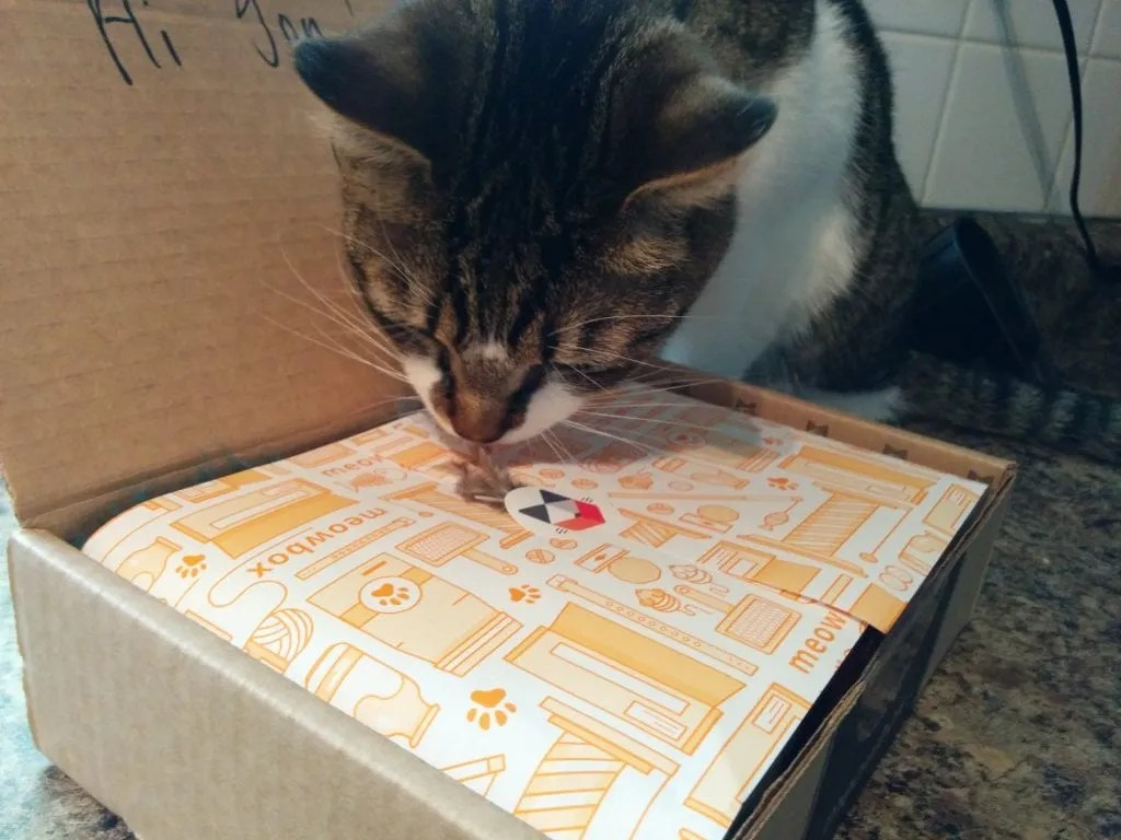 Meowbox May 2016 Review