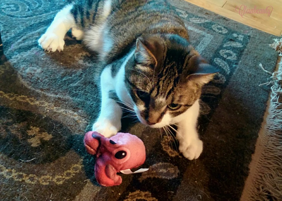 January 2017 Meowbox - Ion Playing with Octopus Toy