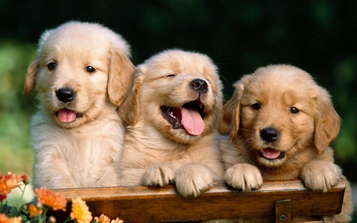 Cute-Dog-Wallpapers5