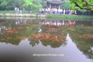 Fish viewing flower pond Hangzhou 16