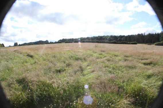 1-virgin-field